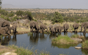 14 Days Kenya Migration safari