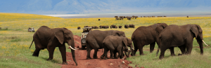 9 days Tanzania northern circuit wildlife