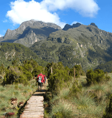 15 Days Rwenzori Hike & Gorilla Safari.