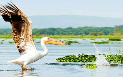 9 Days Kenya Luxury Flying Safari