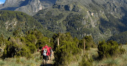 Rwenzori mountain hikes